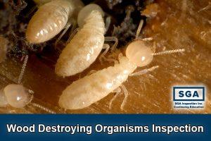SGA Wood destroying organism structural pest inspection